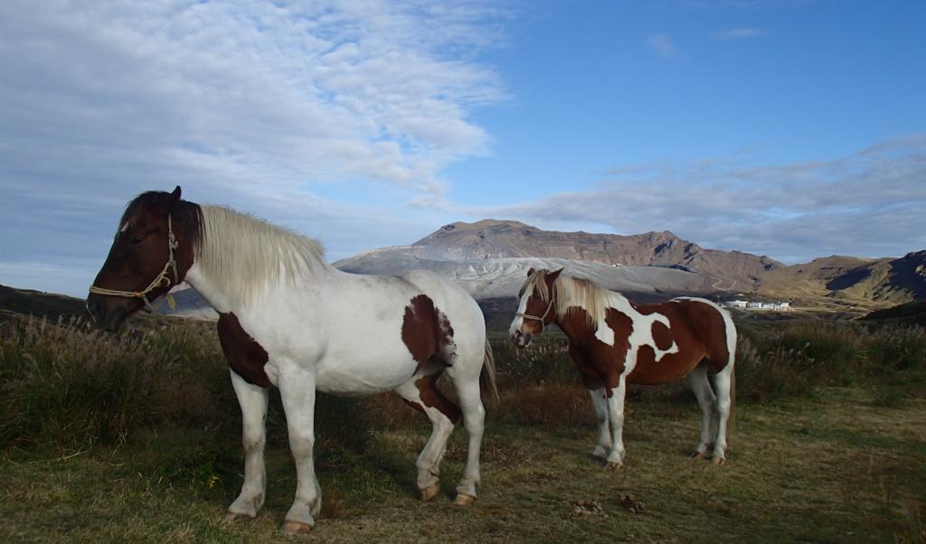 aso kusasenri horses